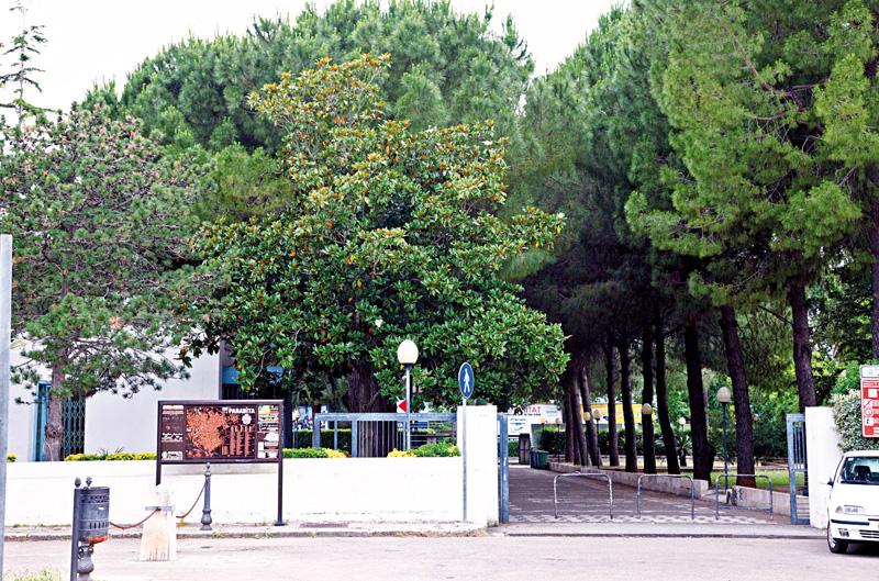 parco comunale parabita entrata Foto Antonio Marrocco