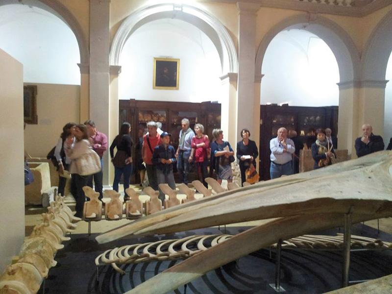 """Museo Civico """"E. Barba"""""""