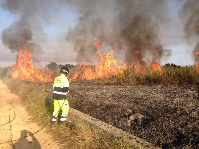 incendio parco litorale di Ugento 2014.2
