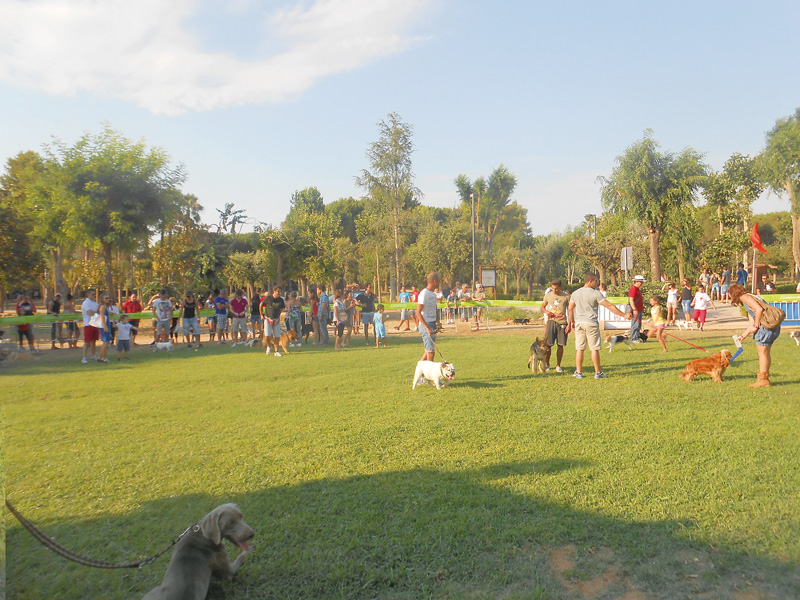 mostra canina 2013 alezio (1)