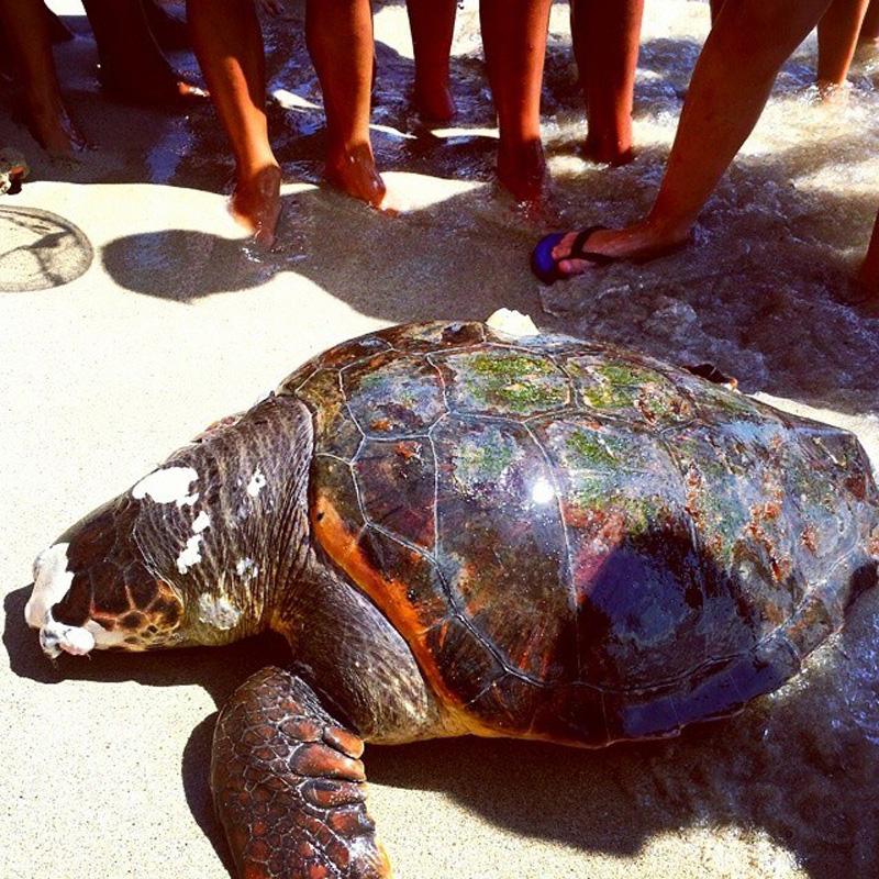 tartaruga spiaggiata lido bikini beach
