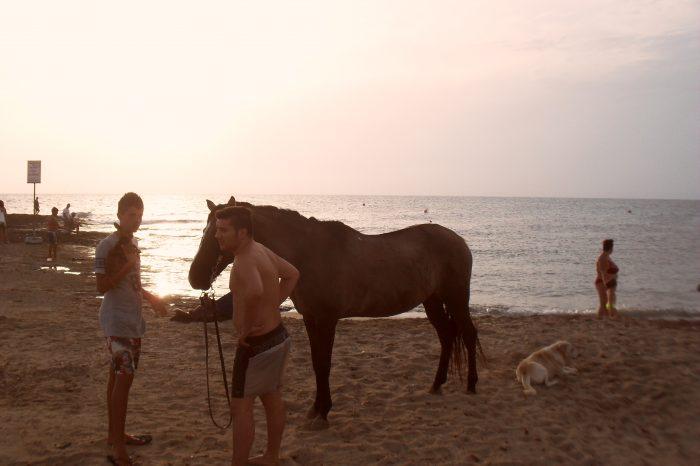 Anche i cavalli fanno le ferie