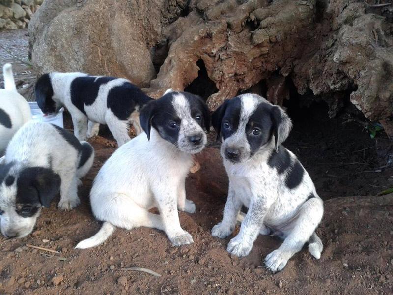 cuccioli da adottare