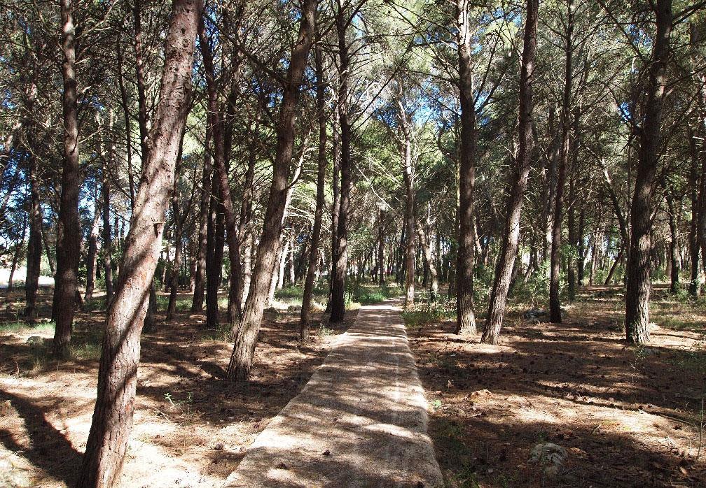 La pineta della collina e, in alto, la planimetria del nuovo sentiero attrezzato per passeggiare e fare sport all'aria aperta