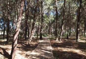 pineta montegrappa - inaugurazione maggio 2016  (2)