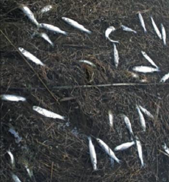 moria pesci ugento