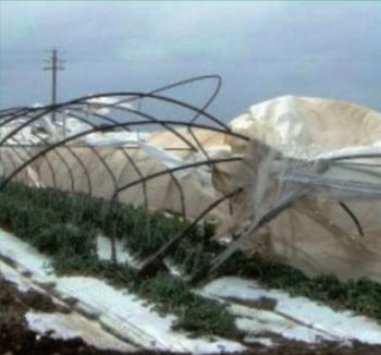 danni neve
