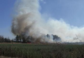 AGOSTO 2011 Fiamme nei campi di spandimento del depuratore comunale sito sulla Provinciale per Taviano