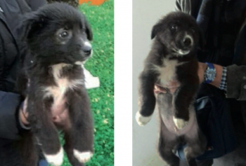 Due dei sette cuccioli da adottare ritrovati dai volontari nei pressi del Supermac sannicola
