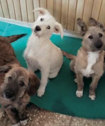 neviano cani