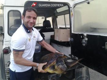 Tartaruga in salvo (2)