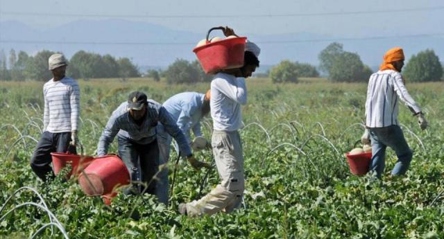 """Lavoratori stagionali nei campi, da Coldiretti l'""""s.o.s."""" sui costi dei  trasporti"""